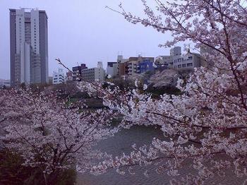 090402_外堀桜.jpg