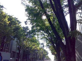090429_昭和の日.jpg