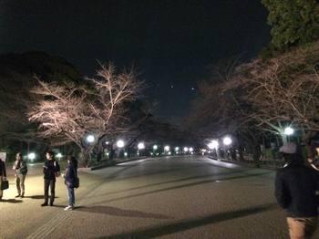 桜並木151807634697163702_n.jpeg