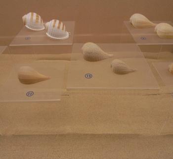 貝の博物館.jpg